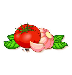 fresh red tomato with garlic basil and pepper vector image