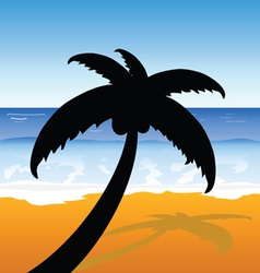 palm on the beach color vector image