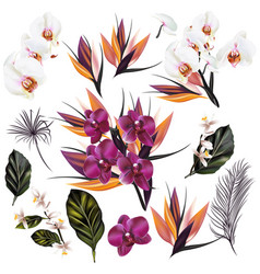 set of detailed orchid flowers and palm leafs vector image
