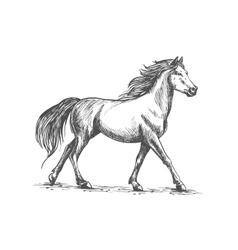 White horse walks gracefully vector image