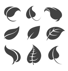 Grey leaves silhouettes on white background vector image vector image