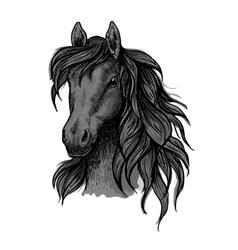 Black horse head sketch portrait vector image vector image