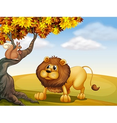 A lion looking at the squirrel vector image