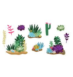 Cactus and succulent set vector