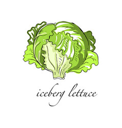 iceberg lettuce vector images (over 380)  vectorstock