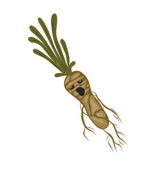 Mandrake root magic potion witch plant vector