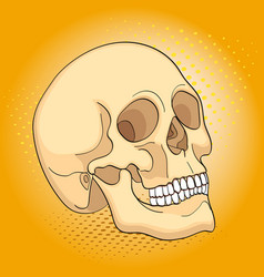 Pop art medical objects human skull comic book vector