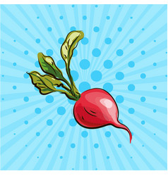 Ripe radish with a green tail on a blue background vector