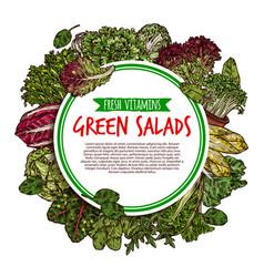 Salad leaf and vegetable greens sketch poster vector