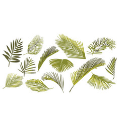 set coconut palm leaves isolated on white vector image