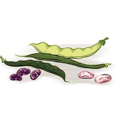 Two pods of green beans and yellow beans a pod vector