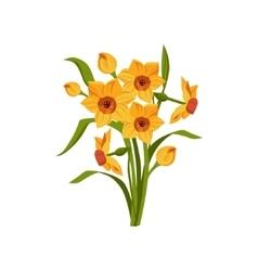 Daffodil Hand Drawn Realistic vector image vector image