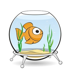 gold fish in aquarium vector image