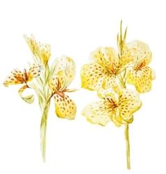 Canna flowers vector
