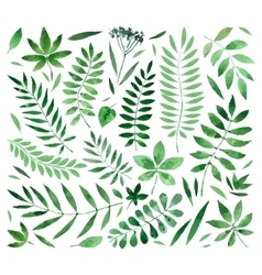 Collection painted watercolors of plants and vector