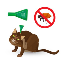 Flea remedy poster with headline and cat vector
