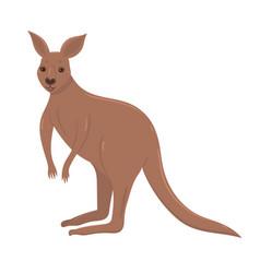 kangaroo isolated on a white background vector image