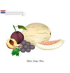 Melon grapes and plum popular fruits of croatia vector