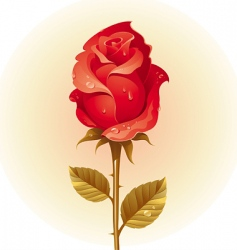 Red rose with dew vector