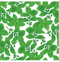 seamless pattern with green basil 4 vector image