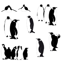 penguin silhouettes on the white vector image vector image