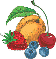 fruits and berries composition vector image