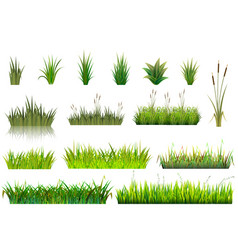 grass grassland or grassplot and green vector image