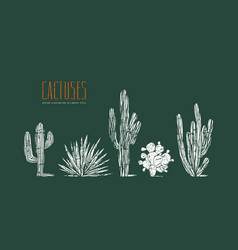 Stock set of hand drawn cactus vector