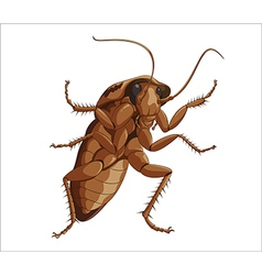 Big cockroach vector image