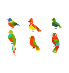Tropical birds collection beautiful birdies with vector
