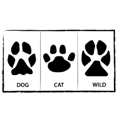 Animal footprints vector