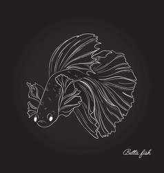 beautiful gold fish underwater line art marine vector image