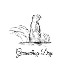 groundhog day sketched with vector image