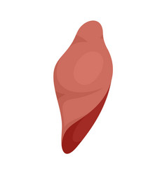 liver icon flat style vector image