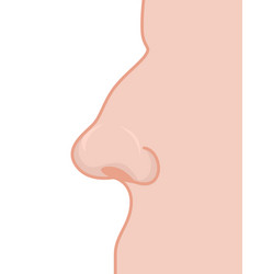 nose profile detail of mans face nostrils and vector image