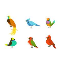 tropical birds collection beautiful birdies of vector image