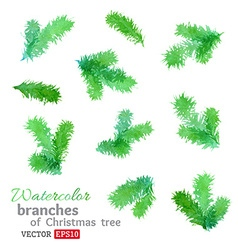 Watercolor branches of Christmas tree vector