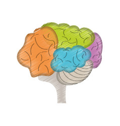 drawing colo brain idea innovation vector image