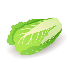 fresh green chinese cabbage icon isolated on white vector image