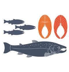 Salmon vector image