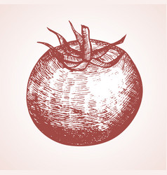 tomato hand draw sketch vector image vector image