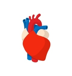 Human heart cartoon icon vector image vector image