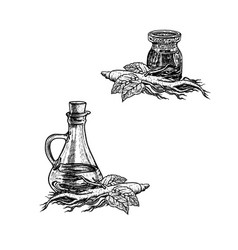 hand drawn sketch of ginseng oil extract of plant vector image