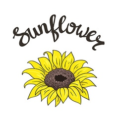hand drawn yellow sunflower on the white vector image