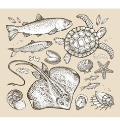 sea animals hand-drawn sketches fish trout vector image