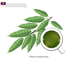 Tiliacora Triandra Leaves Juice of Lao vector image vector image