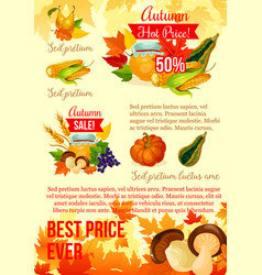 autumn harvest season sale poster template design vector image