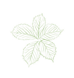 green outline leaves vector image