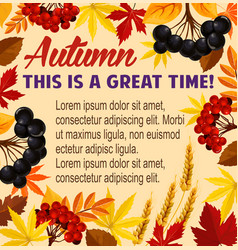 autumn poster acorn leaf rowan berry vector image vector image