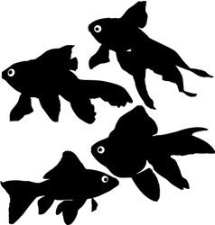 Goldfish or common fish silhouette vector image vector image